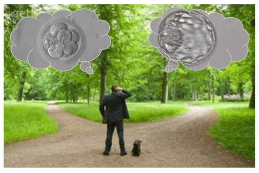 Transferência de embrião