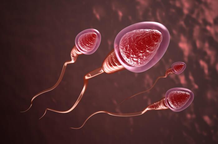 Reprodução humana - Alterações morfológicas dos espermatozoides