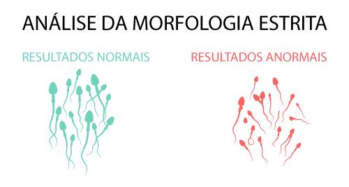 ANALISE-DA-MORFOLOGIA-ESTRITA